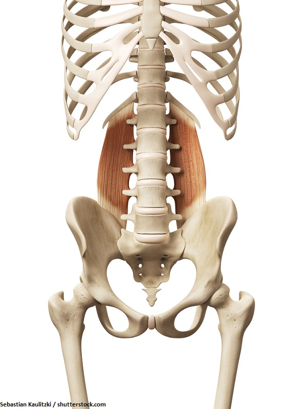 Quadratus lumborum