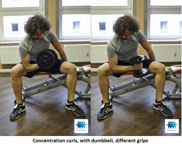 Concentration curls with dumbbell
