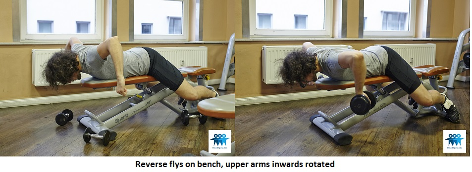 Reverse flys on bench, inward rotated