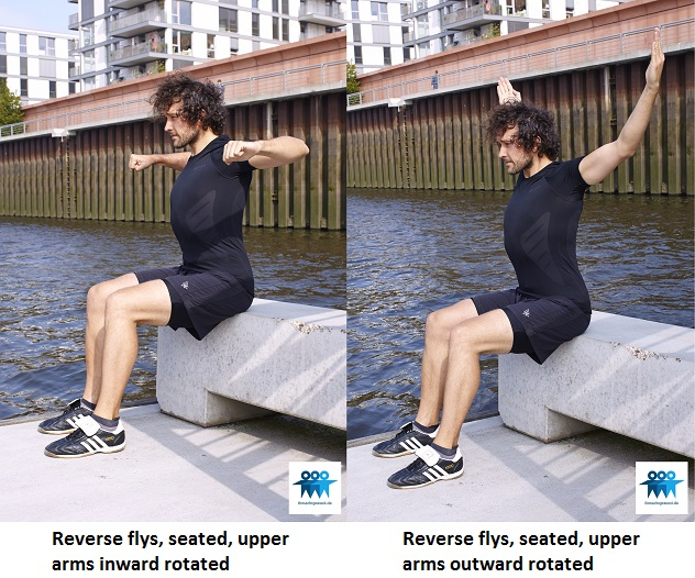 Reverse flys, seated on bench
