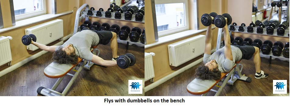 Flys with dumbbells on the bench