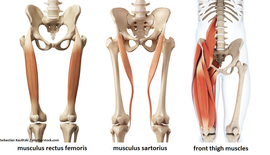 Front thigh muscles | fitmachtgesund.de